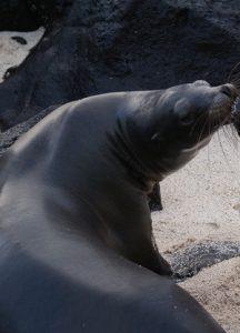 Study in Galapagos