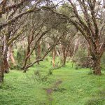 El Angel reserve-Polylepis-Ecuador